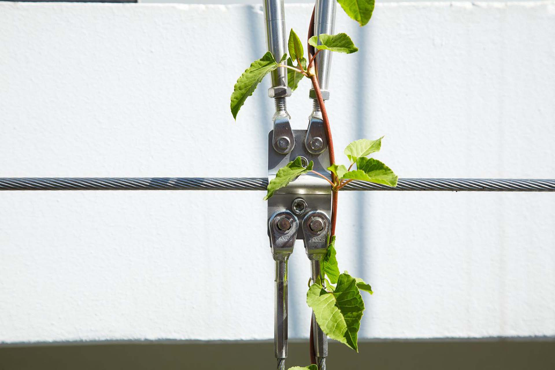 A plant climbing on steel cable and cable connector